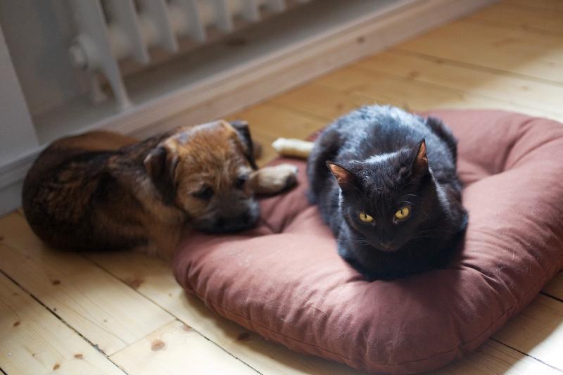 ¿Cómo debe ser la cama ideal para una mascota?