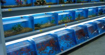 Tres conceptos de éxito en el comercio de acuariofilia