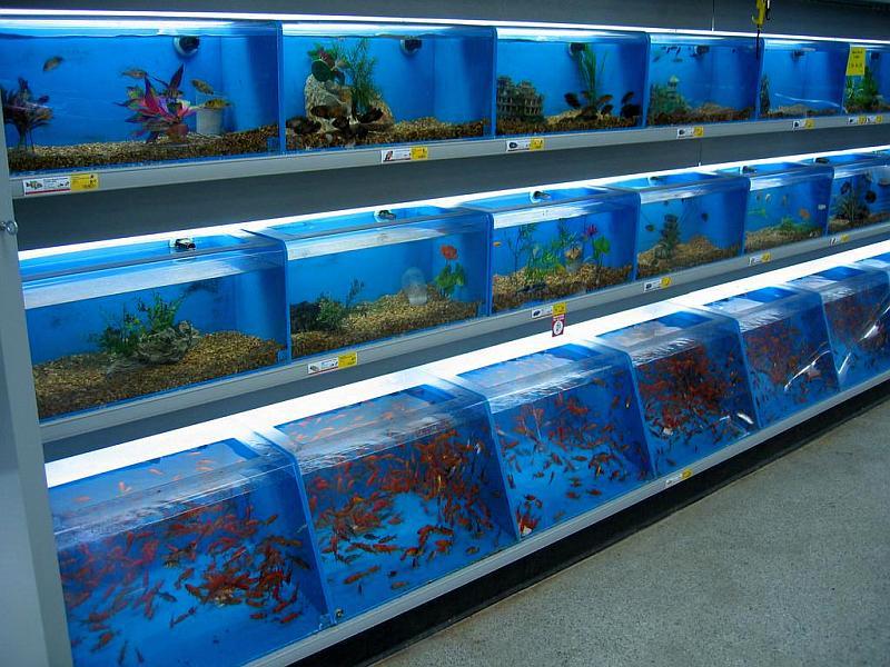 exito acuario