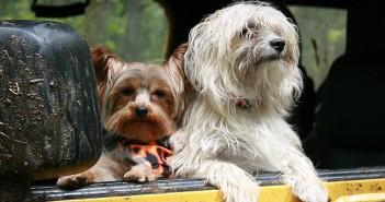 Viajar con animales de compañia