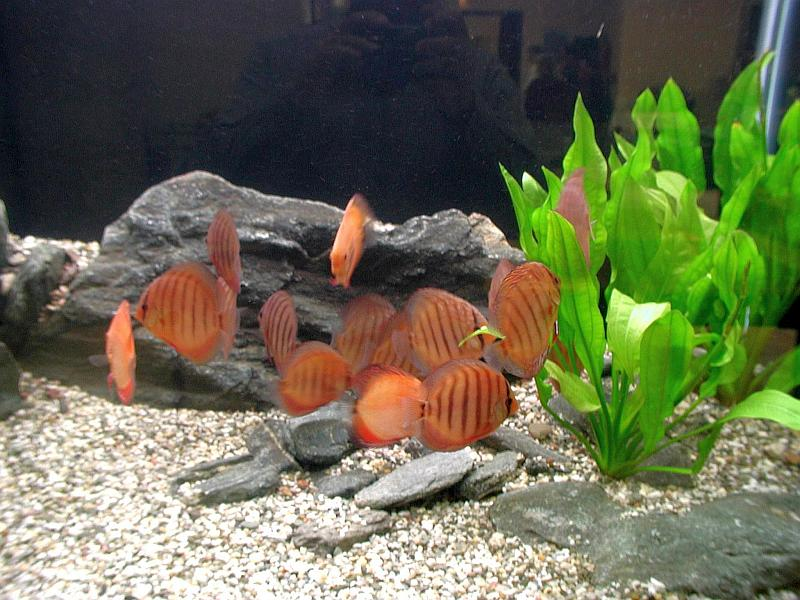 peces acuario