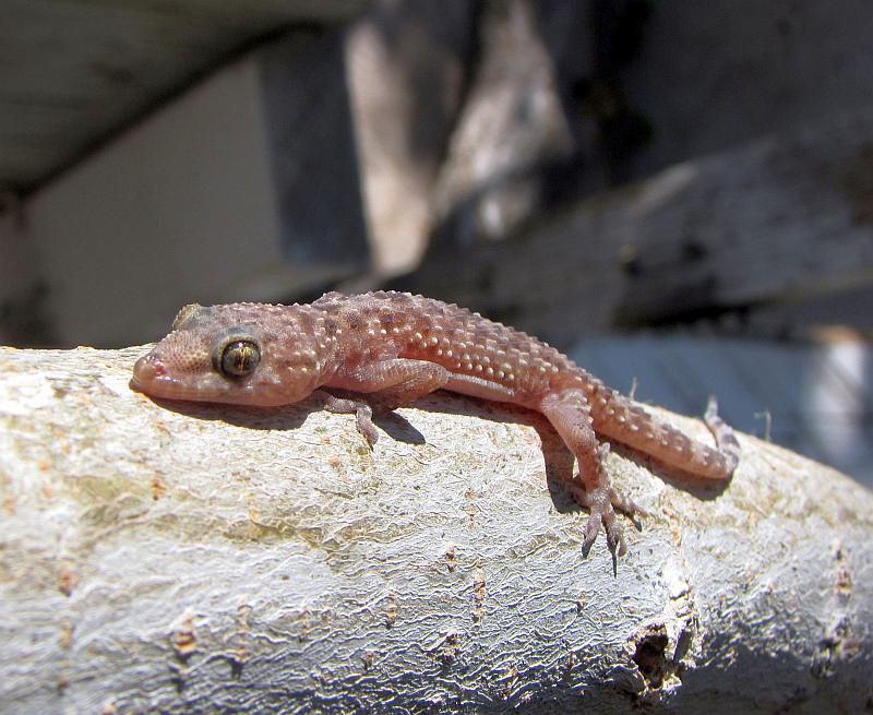La Temperatura De Los Reptiles Y Su Importancia Para La
