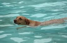 Consejos de la RSCE para el cuidado de los perros en verano