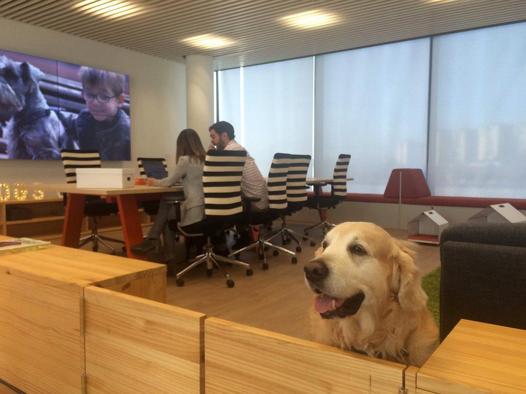 affinity doggy zone