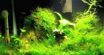 Aclimatación de las plantas de acuario