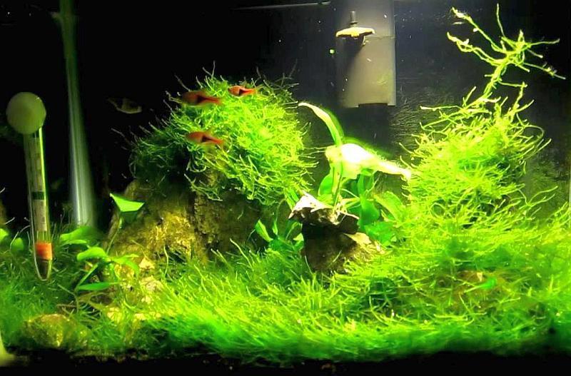 aclimatacion plantas
