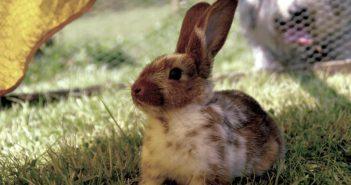 La alimentación de conejos y pequeños mamíferos