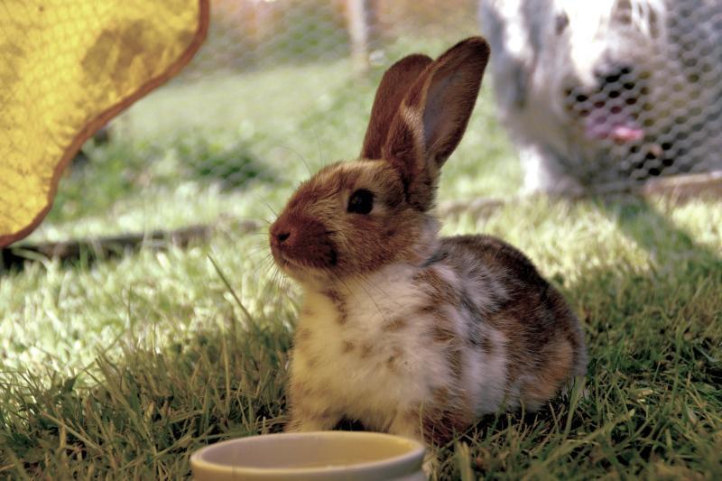 alimentacion de conejos