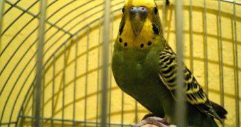 Conceptos básicos para el mantenimiento de aves