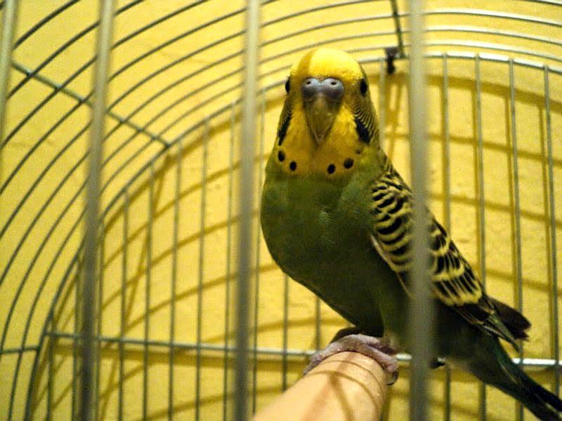 mantenimiento de aves