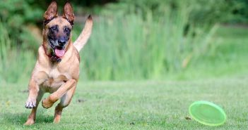 Deporte con perro frisbee