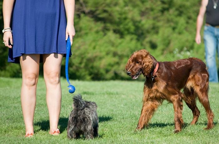 Deporte con perro lanzapelotas