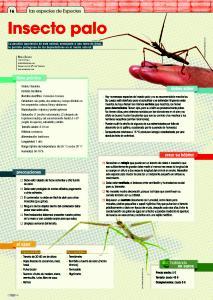insecto palo especiespro 198