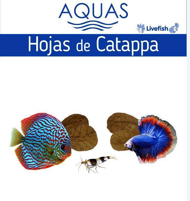 livefish-acua-catappa