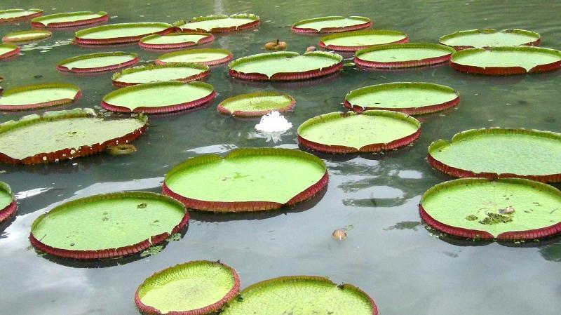 12 trucos para mantener la calidad de agua en los estanques for Estanques para agua