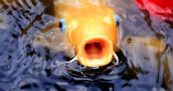 Calidad de agua en los estanques