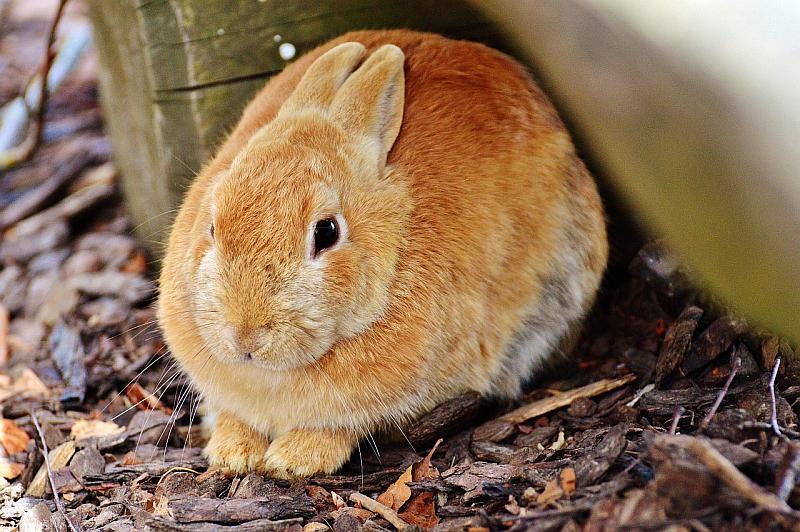 mantenimiento-conejo