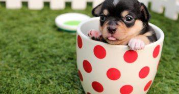 La venta responsable de mascotas
