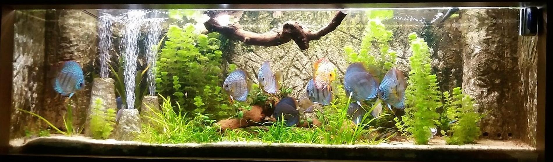 acuario-de-600-lt-jose-m-cabrera