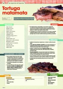 especiespro-201-tortuga