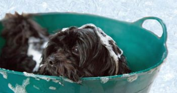 La psicología caninaen la peluquería