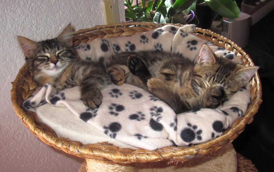 articulos para gatos