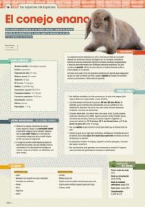 conejo enano especiespro 203