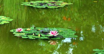 Conoce mejor los estanques ecológicamente equilibrados
