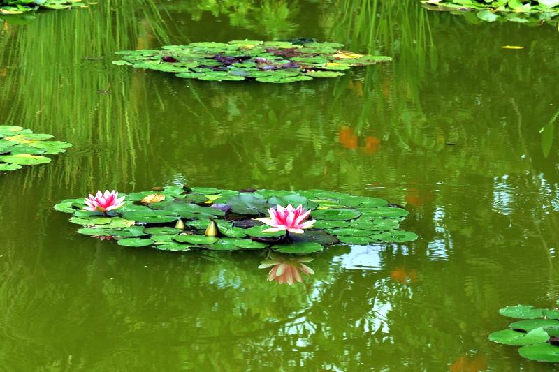 estanques primavera