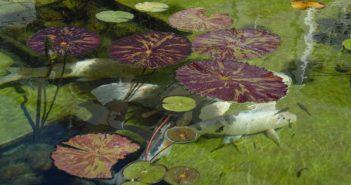 Claves para el mantenimiento de estanques en primavera (I)