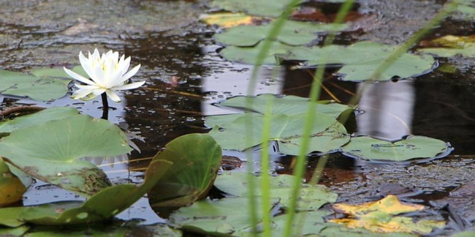Conoce mejor los estanques ecol gicamente equilibrados for Plantas estanque