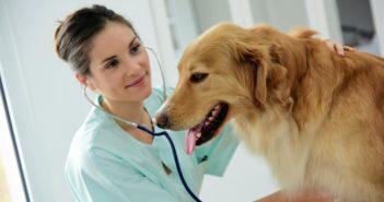 ¿Están los seguros para mascotas extendidos en España?