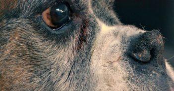cuidados animales mayores