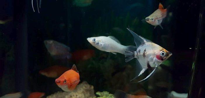 Aditivos para el agua tropical de los acuarios