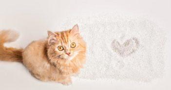 5 claves para cuidar de los gatos en verano