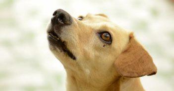 ¡Peligro! Productos tóxicos para las mascotas