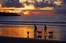 Equipamiento para viajar con perros