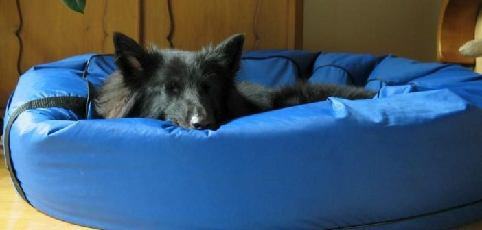 ¿Dónde pongo la cama del perro (o del gato)?