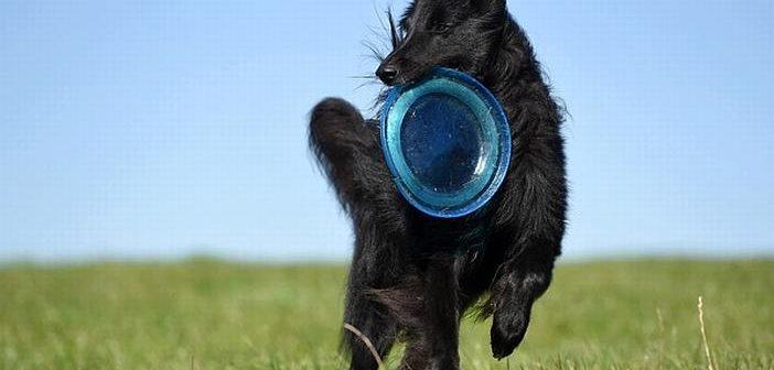 Ideas para practicar deporte con el perro en verano