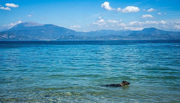 anuncios perra Deportes acuáticos