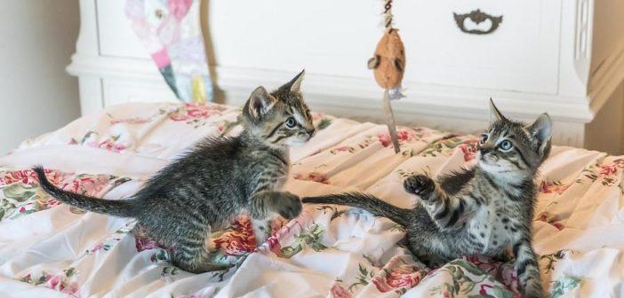 ¿Por qué juegan los gatos y los perros?