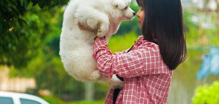 ¿Cuáles son las mayores preocupaciones de los propietarios de mascotas?