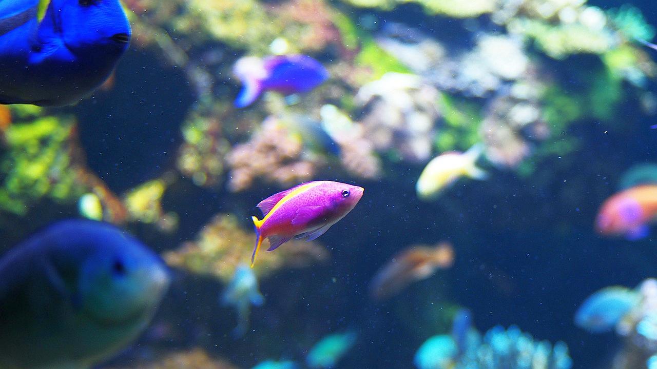 Lo que debes saber para vender comida para peces for Comida para peces