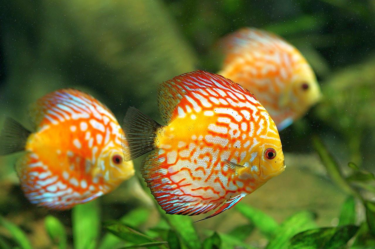 Lo que debes saber para vender comida para peces for Comida congelada para peces