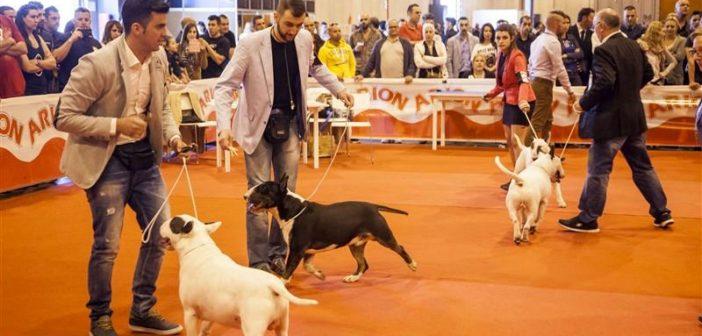 Ya está aquí la agenda de actividades de la Real Sociedad Canina de España para 100×100 Mascota 2018
