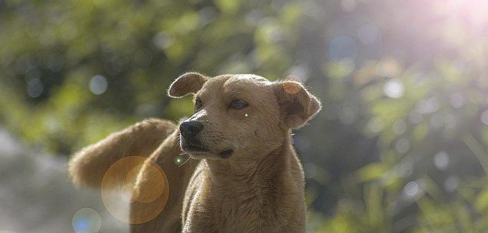 Los peligros del sol para perros y gatos