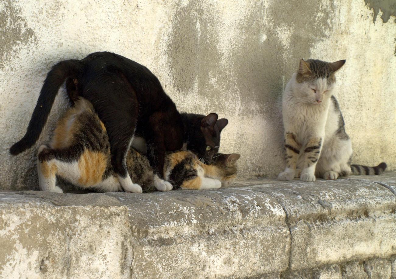 Mujeres sexo con gatos