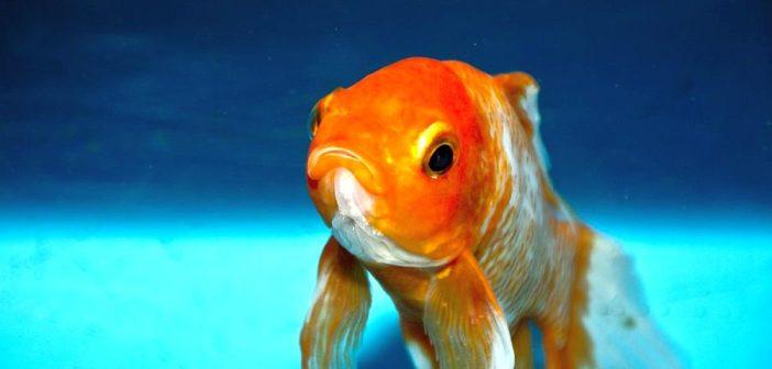 ¿Pueden deprimirse los peces?
