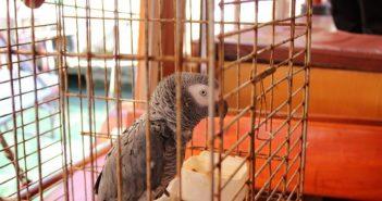 alimentacion correcta de las aves