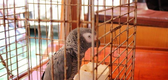 Cómo prevenir enfermedades de las aves con una alimentación correcta